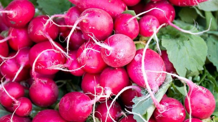 Radish can be used instead of Parsnips